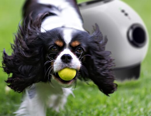 Best Tennis Ball Machines for Dogs