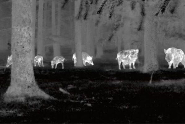 Best Night Vision Scopes for Hog Hunting