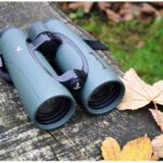Best Swarovski Binoculars for Birding
