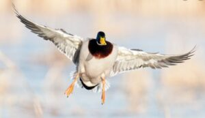 Best Breathable Waders for Duck Hunting