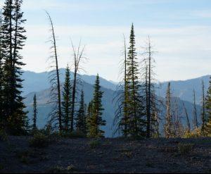 best spotting scope for backcountry hunting