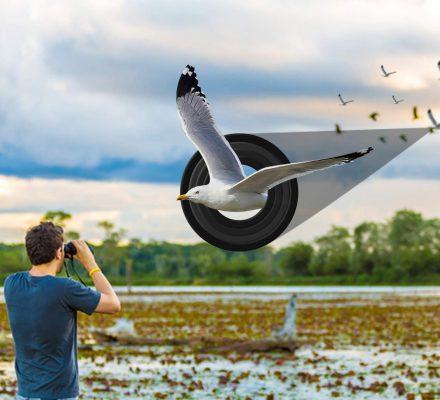 Best Binoculars for Stargazing and Bird Watching