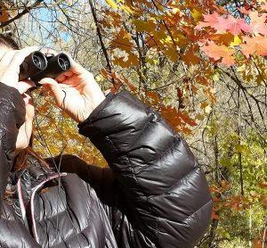 Best Compact Binoculars for Wildlife Viewing