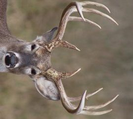 Best Scope for Deer Hunting In Woods